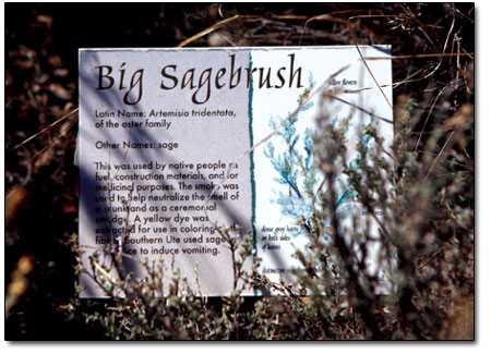 Signage, as seen here, displays information about native vegetation.