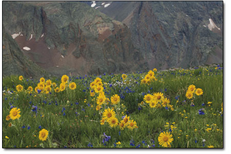 Sunflowers and bluebells bloom along the Continental Divide.